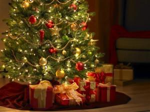 Christmas-Trees-002