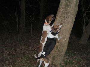 dogs barking up tree