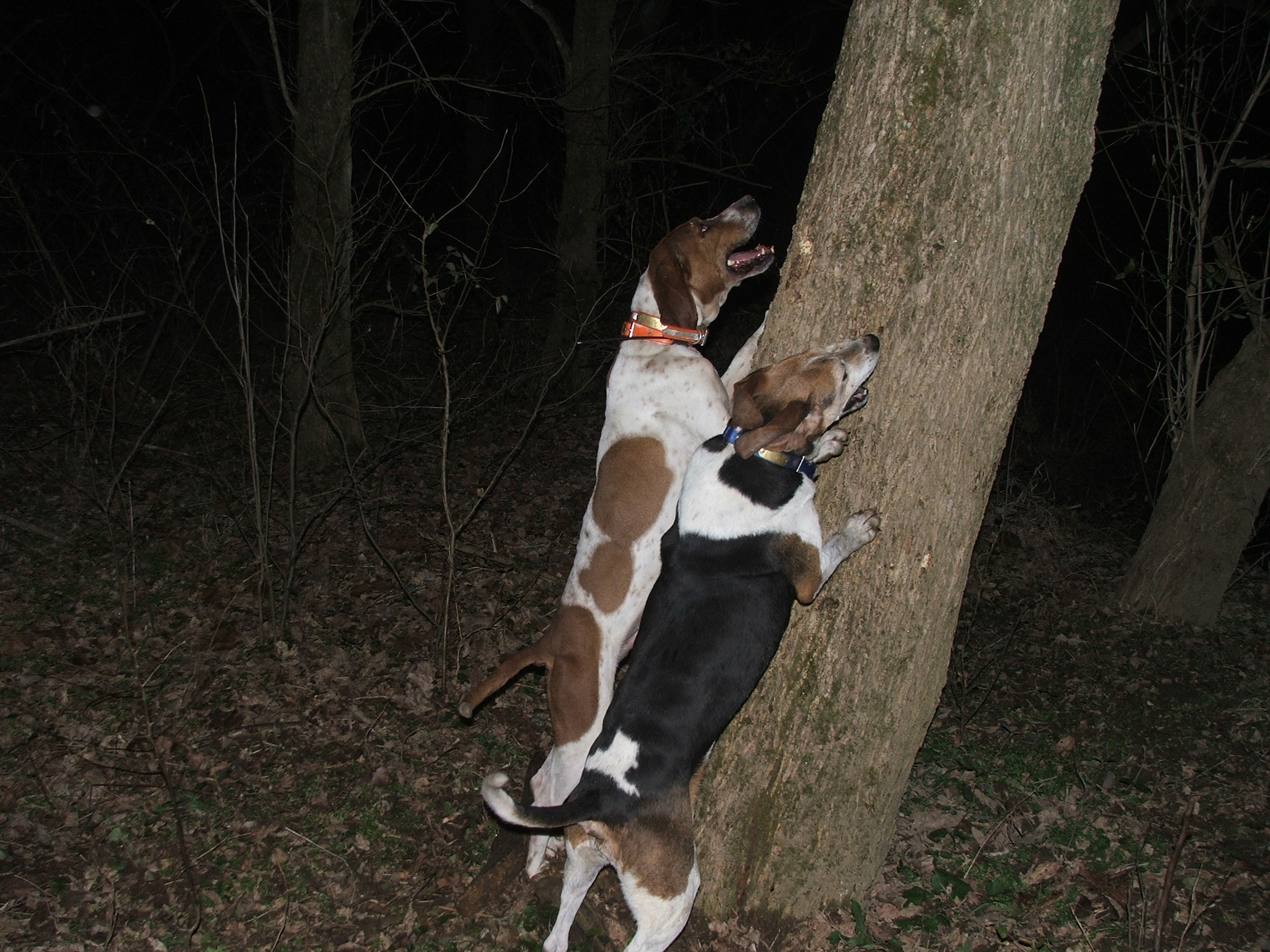 dogs chasing through the - photo #49